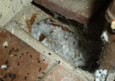 building-survey-njc-building-consultants-insect-rodent-infestation